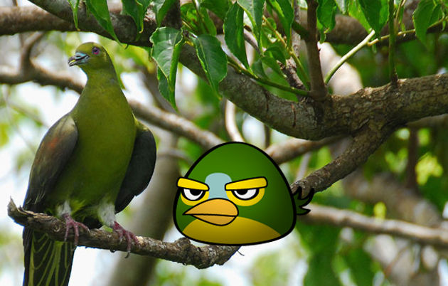 angry birds photo 3a