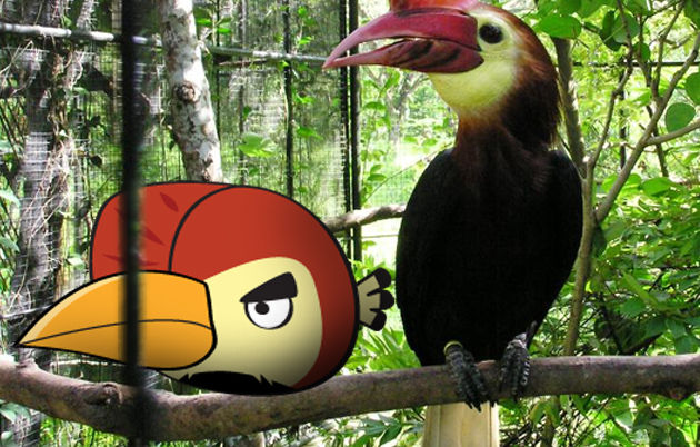 angry birds photo 4a