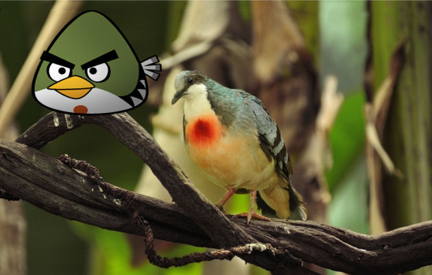 angry birds photo 5