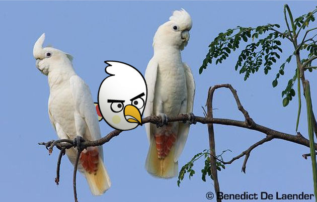 angry birds photo 6