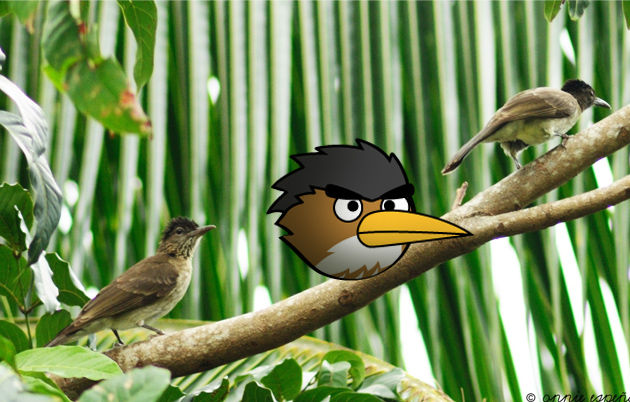 angry birds photo 7