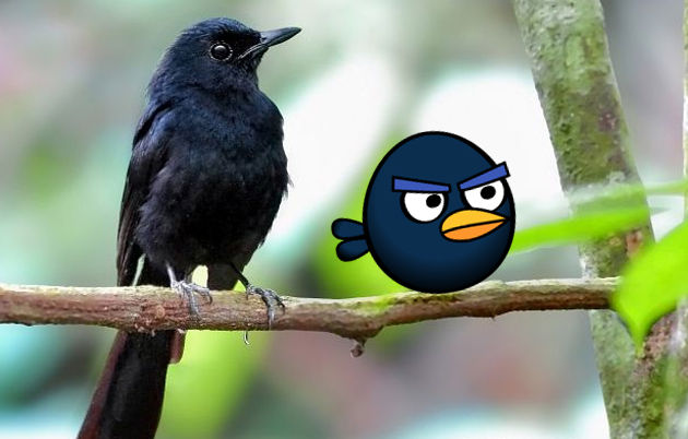 angry birds photo 8a