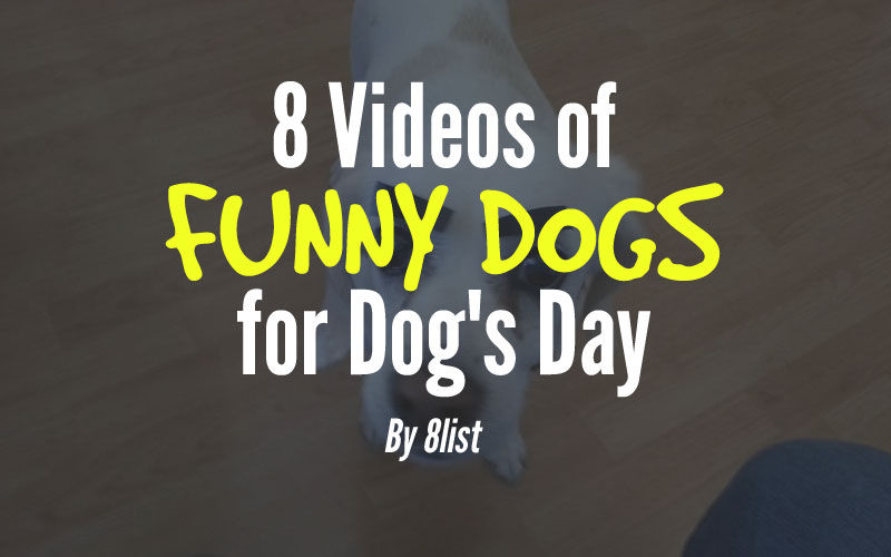dogs-funny-videos